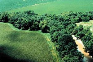 Aerial shot of green land, trees, and a band of water and sediment running between the trees